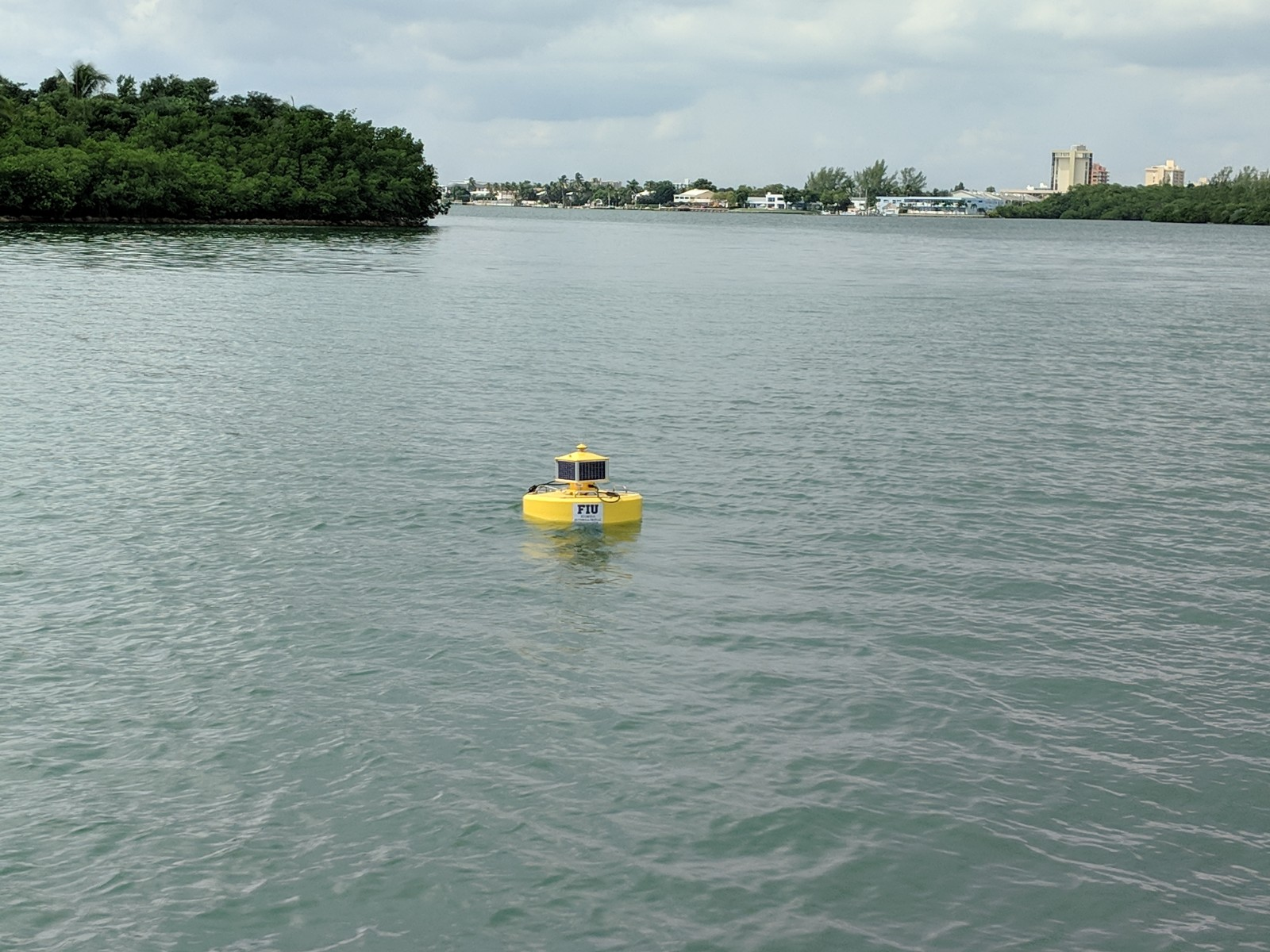 Algae Blooms in Biscayne Bay Killing Local Species - PantherNOW